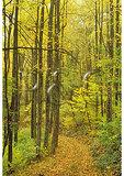 Fire Road, Jarman Gap, Shenandoah National Park, Virginia