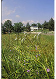 Farm near Springwood, Shenandoah Valley, Virginia