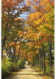 Road near Randolph, Vermont