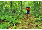 Kennison Mountain Trail, Cranberry Wilderness, Mill Point, West Virginia