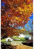 Travelors Repose, Barton, West Virginia
