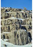 Big Horn Sheep, National Elk Refuge, Jackson Hole, Wyoming