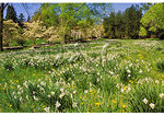 Field of Flowers, State Arboretum of Virginia, Boyce, Virginia
