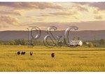 Sunrise, Swoope, Shenandoah Valley, Virginia