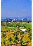 Cutting Corn, Dayton, Shenandoah Valley of Virginia