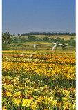 Andre Viette Farm & Nursery, Staunton, Virginia