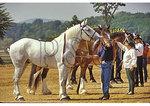 Horse Show at County Fair, Rockingham County, Shenandoah Valley, Virginia