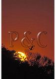 Heron in flight, Sunrise, Chincoteague National Wildlife Refuge, Virginia