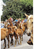 Ponies in town, Annual Pony Swim and Auction, Chincoteague, Virginia