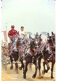 Draft horse show at County Fair, Rockingham County, Shenandoah Valley, Virginia