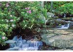 Above Crabtree Falls, Blue Ridge Parkway, Virginia