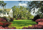 Azalea bloom at Orton Mansion, Orton Plantation, Wilmington, North Carolina