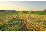 New cut Hay at a Farm in the Shenandoah Valley of Virginia