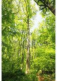 Trail Thru Tulip Tree Woods at Brandywine Creek State Park, Talleyville, Delaware