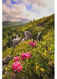 View of Grandfather Mountain from Flat Top, Blue Ridge Parkway, North Carolina