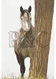 Percheron Horse and Locust Tree Trunk, Churchville, Virginia
