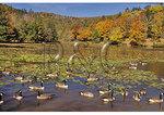 Bass Lake At Moses Cone Mansion, Moses Cone Memorial Park, Blue Ridge Parkway, North Carolina