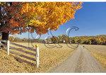 Boy On Bike and Fall Display, Madison County, Virginia
