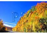Highlands Scenic Highway, Slatyfork, West Virginia