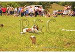 Lure Coursing, Horse & Hound Wine Festival, Bedford, Virgnia
