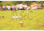 Lure Coursing, Horse & Hound Wine Festival, Bedford, Virgnia