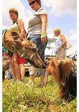 Horse & Hound Wine Festival, Bedford, Virginia
