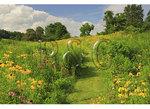 Walk Through Wildflowers, Valley Of Virginia Wildflowers, Fairfield, Virginia