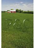 Soy Bean Field, Martinsburg, Maryland