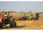 Mennonite Corn Harvest, Dayton, Shenandoah Valley of Virginia