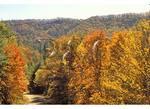 Main Road in Cataloochee Valley, Great Smoky Mountains National Park, North Carolina