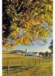 Farm and Maple tree at sunrise, Parnassus, Virginia