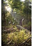 Dead Hemlock, Limberlost Trail, Shenandoah National Park, Virginia