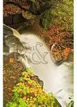 Upper Falls, Falls of Hills Creek, Richwood, West Virginia