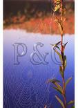 Spider Web, Spruce Knob Lake, Spruce Knob, Judy Gap, West Virginia