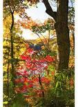 Foliage at Fontana Lake, Great Smoky Mountains National Park, North Carolina