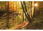 Hiking Trail Near Fontana Dam, Great Smoky Mountains National Park, North Carolina