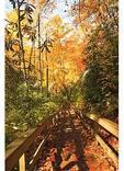 Mingo Falls Trail, Big Cove, Great Smoky Mountains National Park, North Carolina