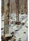 Maple Sugar Collection, Doe Hill, Virginia