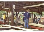Sawmill, Bridgewater, Virginia