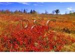 Graveyard Fields, Blue Ridge Parkway, North Carolina