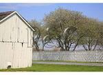 Cherry Tree, Belle Grove Plantation, Middletown, Shenandoah Valley, Virginia