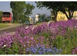 Roadside Wildflowers  in the Shenandoah Valley of Virginia