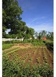 Lower Garden, George Washington's Mt. Vernon Estate & Gardens, Mt. Vernon, Virginia