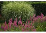 Perennial Garden, Glen Burnie, Winchester, Virginia