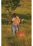 Woman with Cane Photographs Fawn, Shenandoah National Park, Virginia