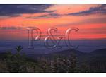 Milkweed at Sunset, Shenandoah National Park, Virginia
