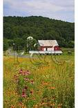 Valley Of Virginia Wildflowers, Fairfield, Virginia