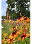 Valley Of Virginia Wildflowers, Fairfield, Virginia