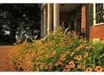 Black Eyed Susan, Front Entrance, Monticello, Charlottesville, Virginia