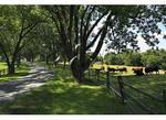 Entrance Road, Ash Lawn ñ Highlands, Charlottesville, Virginia